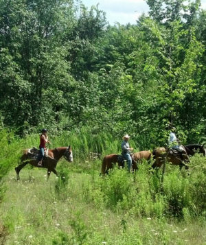 Riders on horses riding through tall grass.