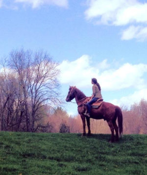 Woman on top of hill sitting on tall brown horse taking in the view.