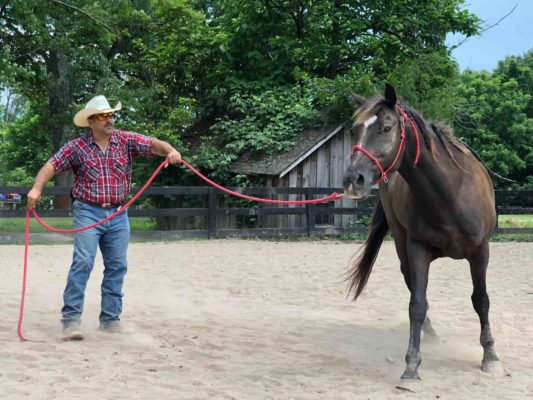 horse wrangler leading a horse on a lead rope, horse is brown with no saddle